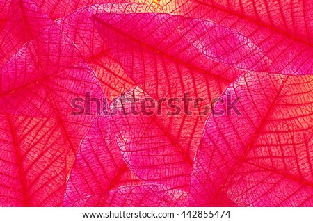 Background of natural leaves in hard pink red tone