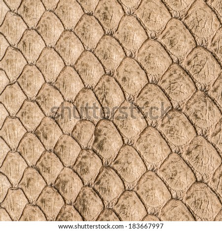 background of natural snake skin closeup