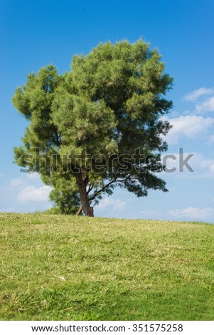 Background of nature. Field with trees and sky.