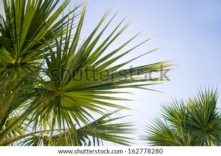 Background of palm leaves in sunlight against a blue sky. - stock photo