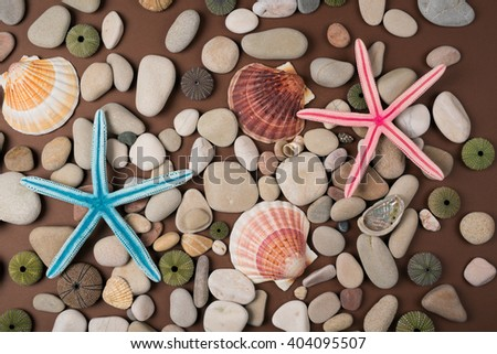 Background of pebbles, different shells and starfishes