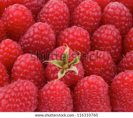 Background of Perfect Juicy Raspberries with Stem closeup - stock photo