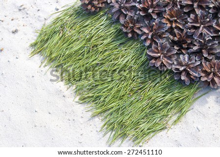 background of pine needles on the sand with cones in the sand