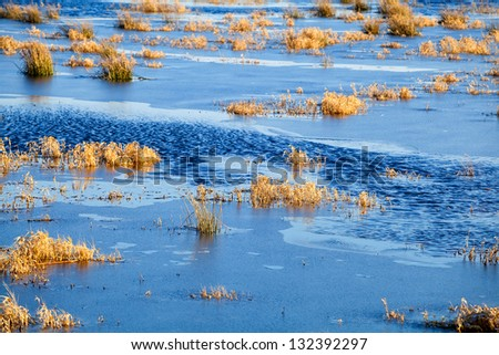 background of plants in frozen lake during winter