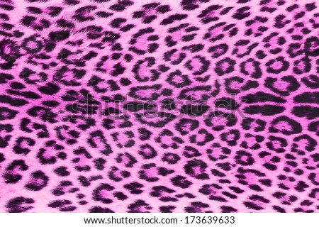 background of purple  leopard skin