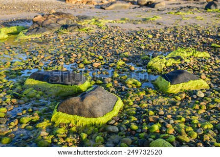 Background of rocks and mosses with the peaceful and quite water isolated in the sunlight at the Co Thach beach, Binh Thuan province, Vietnam, Southeast Asia. - stock photo