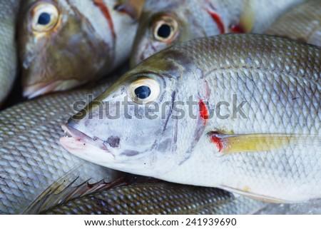 Background of sea fish head on fish market in Vietnam - stock photo