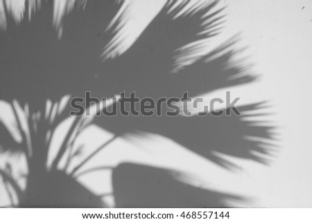 Background of shadow of leaves on a white wall.