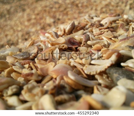Background of shells with selected Focus and blurred Background - stock photo