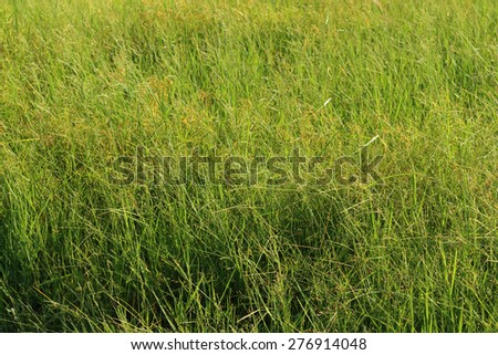 background of spring grass in the garden - stock photo