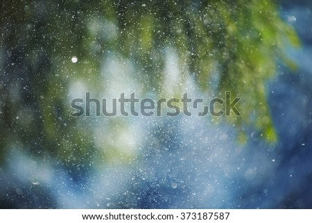 Background of spruce trees. Small snowflakes glittering in the sun.