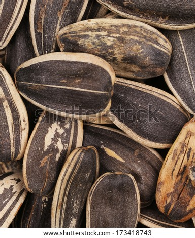 Background of sunflower seeds. Whole background. Black seeds.