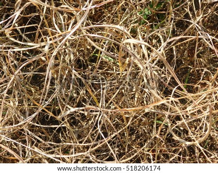 Background of Tall, Dry Grass From Above