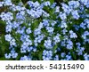 background of the many beautiful blue myosotis - stock photo