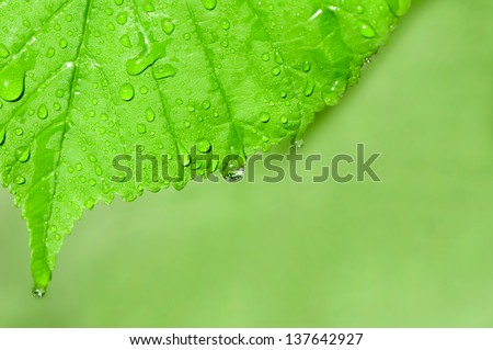 background of the water drops on a green leaf macro