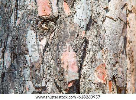 Background of tree bark like a human face