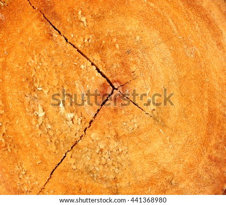 Background of tree-ring dating.