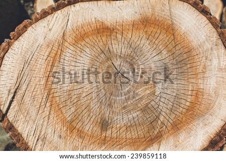 Background of truncated circle tree - stock photo