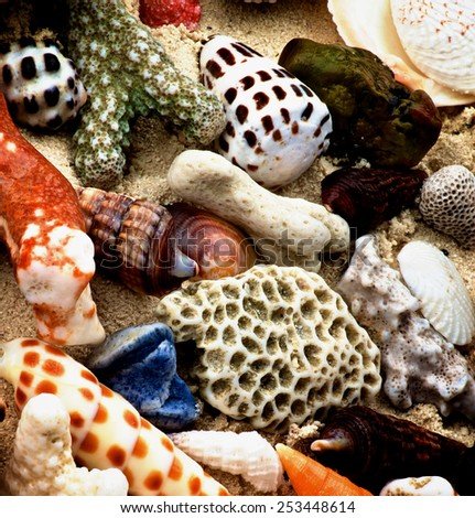 Background of Various Ocean Shells, Conch Shells, Corals Pieces and Pebbles closeup on Sand  - stock photo
