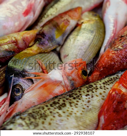 Background of Various Raw Fish with Red Mullets, Sea Bream, Trout and Dorada on Market Place. Focus on Fish Eyes