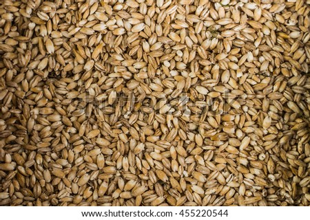 Background of Wheat. Harvest. Close-up. Top view
