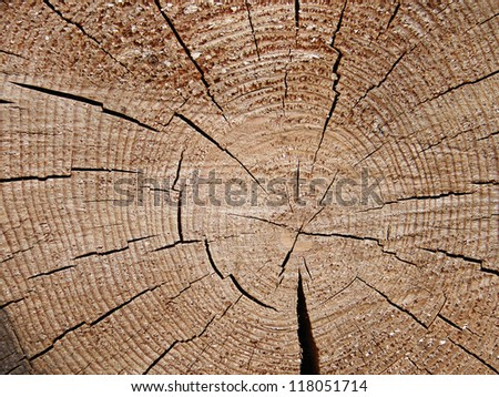Background of wood texture.