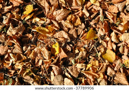 Background of yellow and brown autumn leaves captured in bright sunlight - stock photo