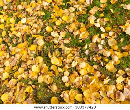 Background of yellow autumn leaves - stock photo