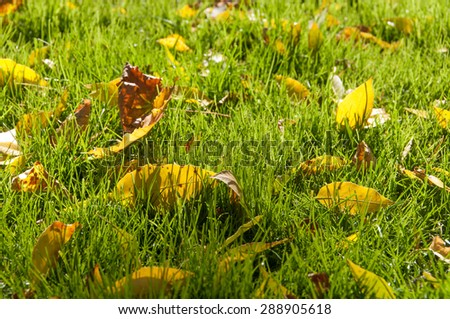 background of yellow leaves on the grass in autumn closeup - stock photo