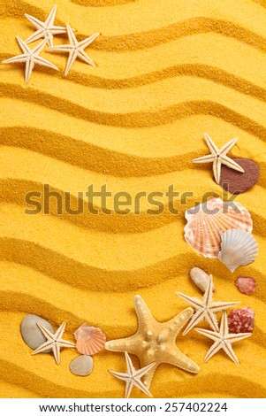 Background of   yellow  sand, shells and starfishes.  - stock photo