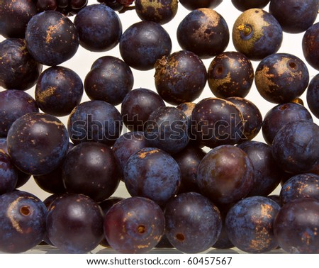background or texture image of wild Hedgerow Sloes on white. - stock photo