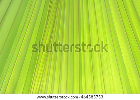 Background palm green leaves