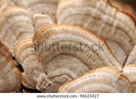 Background pattern of cluster of fungus growing on tree trunk, with selective focus