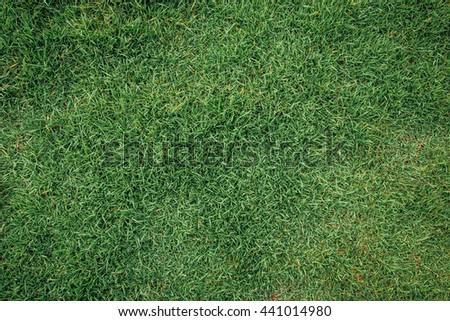 Background pile of green grass