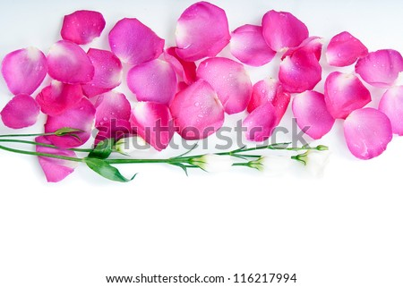 background pink rose petals and flowers - stock photo