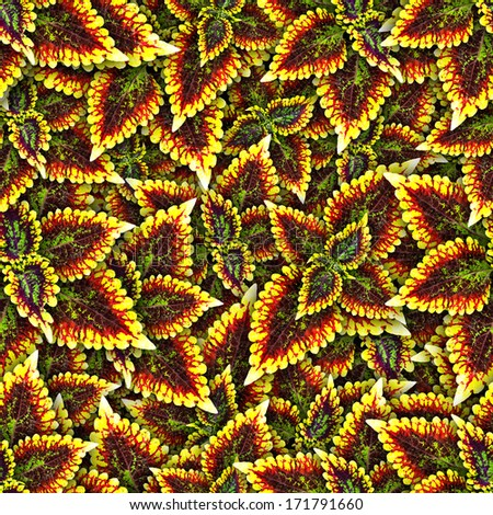 Background seamless pattern with leaf - stock photo
