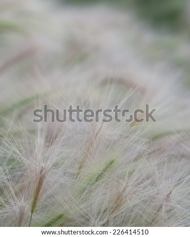 Background soft grass texture with selective focus in foreground