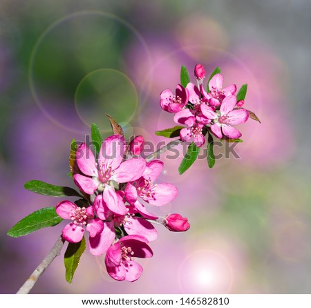 background sprig of beautiful cherry blossom - stock photo