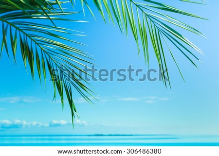 Background Summer Paradise  - stock photo