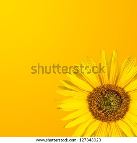 background sunflower - stock photo