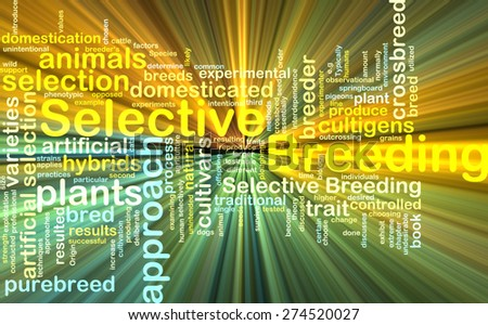Background text pattern concept wordcloud illustration of selective breeding glowing light