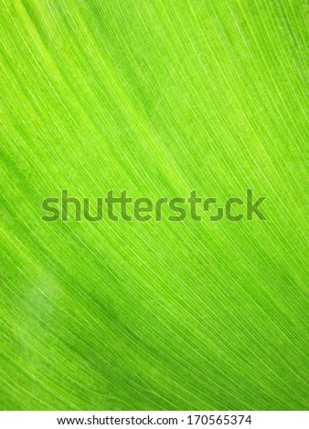 background, texture image is close up of water hyacinth - stock photo