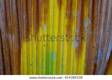 background texture of colorful palm leaf background,select focus with depth of field:ideal use for background