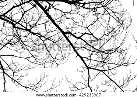 Background texture of dead wood tree branches on flat white background for use as creativity material design or inspiration of abstract nature and environment preserve.
