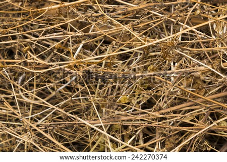 Background texture of dried grass, hay or straw conceptual of the winter season or silage in farming and agriculture - stock photo