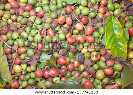 Background texture of green coffee beans