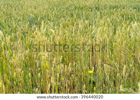 Background texture of hay - stock photo