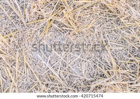 Background texture of the hay in the village im autumn time - stock photo