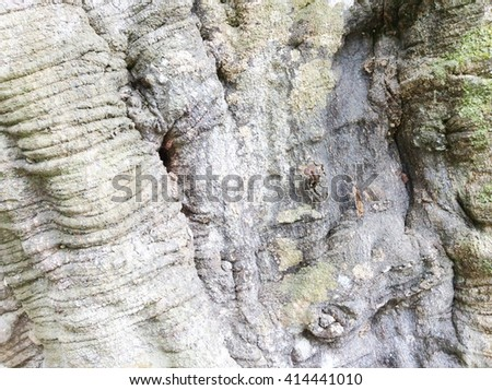 Background texture of tree bark.