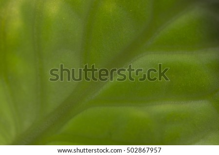 Background texture violet leaves